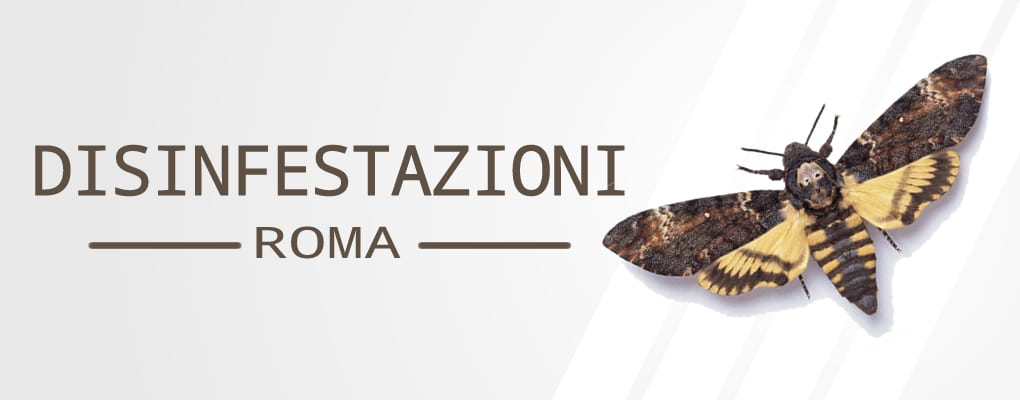 Disinfestazione Via Nazionale Roma - Preventivo Gratuito. Interventi in Giornata. Specifici sopralluoghi, Tutti i tipi di disinfestazione a Roma